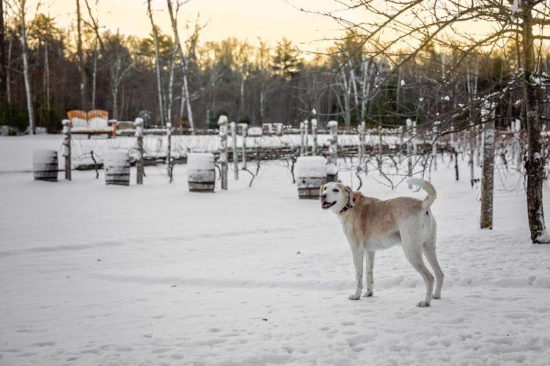 Zorvino-Vineyards-Snow-Blog-1